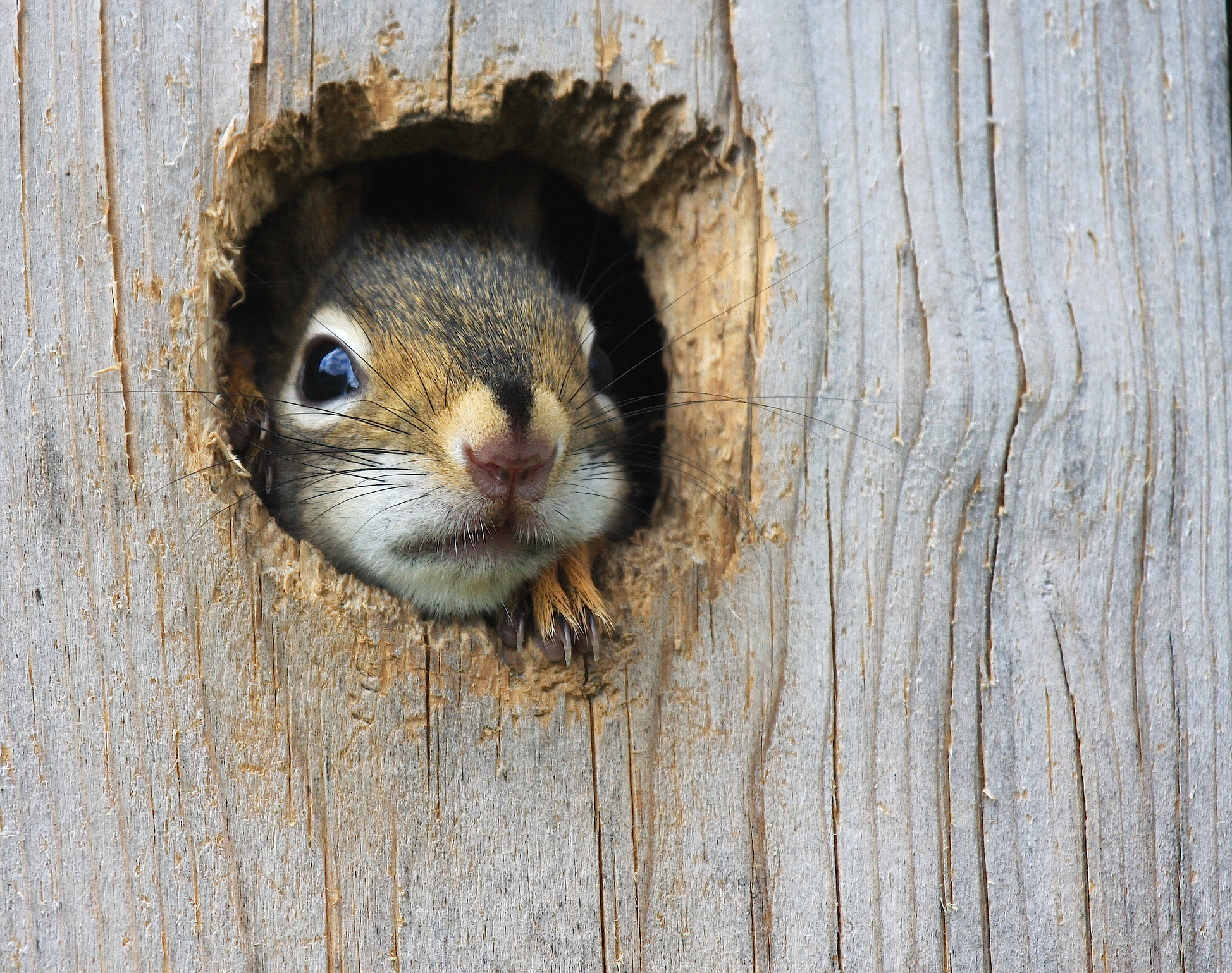 Four Facts Every Recruiter Should Know About Purple Squirrels
